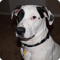 Adopt A Pet :: Scoobie - Turlock, CA