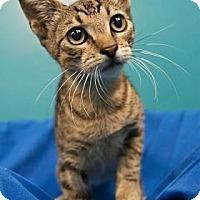 Adopt A Pet :: Boris - New Orleans, LA