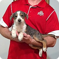 Adopt A Pet :: Patches - South Euclid, OH