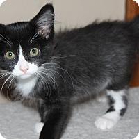 Adopt A Pet :: Addison - Naperville, IL