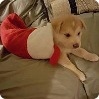 Adopt A Pet :: NORTON - Winnipeg, MB