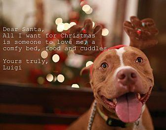 Pit Bull Terrier Mix Dog for adoption in Homestead, Florida - Luigi (courtesy listing henry)