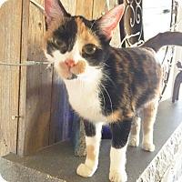 Adopt A Pet :: Gypsy Rose - Arlington/Ft Worth, TX