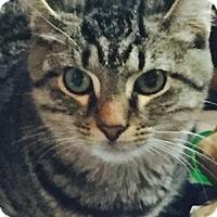 Adopt A Pet :: Oscar (FCID# 07/27/16 - 22 Foster) - Greenville, DE