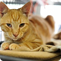 Adopt A Pet :: Dustin - Queens, NY
