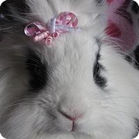 Adopt A Pet :: Puffy - Warren, MI