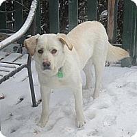 Adopt A Pet :: Bailey - Saskatoon, SK