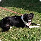 Adopt A Pet :: CAM
