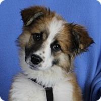 Adopt A Pet :: Matilda - Minneapolis, MN