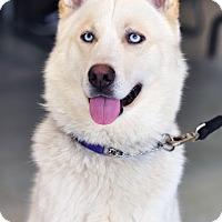 Adopt A Pet :: Durango - Horsham, PA
