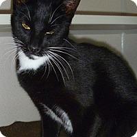 Adopt A Pet :: Bennie - Hamburg, NY