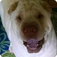 Adopt A Pet :: Riley - Barnegat Light, NJ