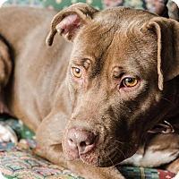 Adopt A Pet :: Ginger - Dearborn, MI