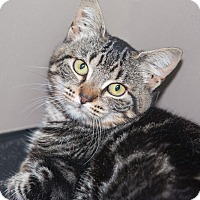 Adopt A Pet :: Rosie - Elmwood Park, NJ