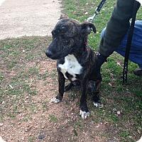 Adopt A Pet :: Jack - Marble Falls, TX
