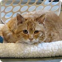 Adopt A Pet :: Oakley - Geneseo, IL