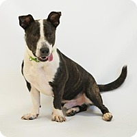 Adopt A Pet :: Trusty - Atlanta, GA