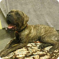 Adopt A Pet :: KING - Upper Marlboro, MD