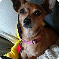 Adopt A Pet :: Spring - Richmond, MI