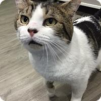 Adopt A Pet :: Skipper - Herndon, VA