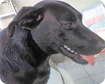 Labrador Retriever Mix Dog for adoption in San Diego, California - Luna