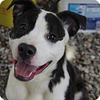 Adopt A Pet :: Prince - Greensboro, NC