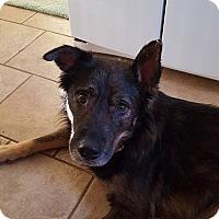 Adopt A Pet :: Hans (Cat Friendly) - Nashua, NH