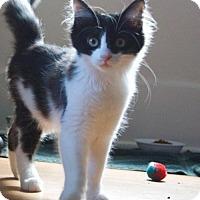 Adopt A Pet :: Faygo (CP) - Livonia, MI