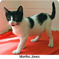 Domestic Shorthair Kitten for adoption in Huntington, New York - Martha Jones 2016089