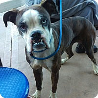 Adopt A Pet :: Baxter - Apache Junction, AZ