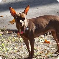 Adopt A Pet :: Lil Bug - Summerville, SC