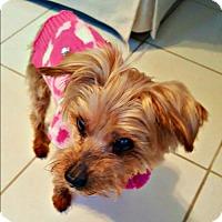 Adopt A Pet :: Zoe - Whiting, NJ