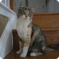 Adopt A Pet :: Tessa - Easley, SC