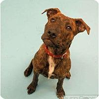 Adopt A Pet :: Roxy - Pending! - kennebunkport, ME