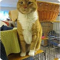 Adopt A Pet :: Dexter - Pascoag, RI