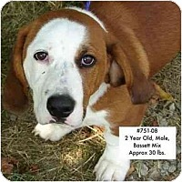Adopt A Pet :: I.D. # 751-08 - RESCUED! - Zanesville, OH
