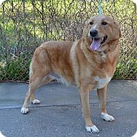 Adopt A Pet :: Jax - Portland, ME