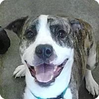 Adopt A Pet :: Benji - Sacramento, CA