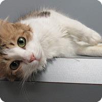 Adopt A Pet :: Dakota - Seguin, TX