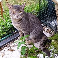 Adopt A Pet :: Cody - Orlando-Kissimmee, FL