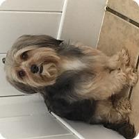 Adopt A Pet :: Oliver - South Gate, CA