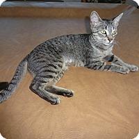 Adopt A Pet :: Tazzy - Mission Viejo, CA