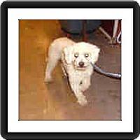 Adopt A Pet :: Adopted!!Hemmingway - IL - Tulsa, OK
