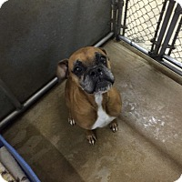Adopt A Pet :: Riley - Hesperia, CA