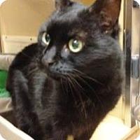 Adopt A Pet :: Sage-PetSmart - Voorhees, NJ