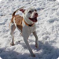 Adopt A Pet :: Bessie D-68539 - Westampton, NJ