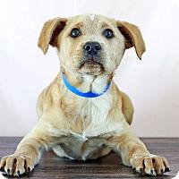 Adopt A Pet :: Willie - Waldorf, MD