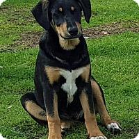 Adopt A Pet :: Zena - Albany, NY