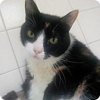 Adopt A Pet :: Willa - Jackson, NJ