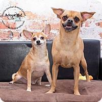 Adopt A Pet :: Ranger and Brutis - Apache Junction, AZ